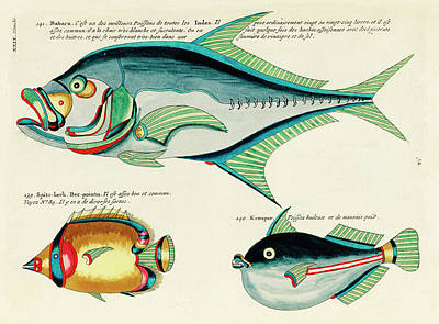 Animals Digital Art - Vintage, Whimsical Fish and Marine Life Illustration by Louis Renard - Babara, Spits-Beck, Krooper by Louis Renard