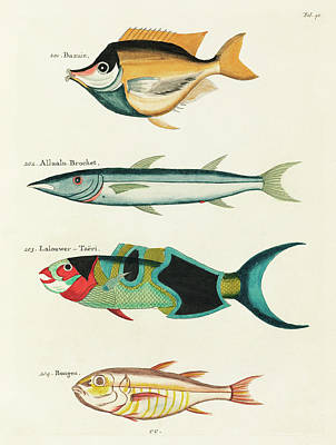 Old Masters - Vintage, Whimsical Fish and Marine Life Illustration by Louis Renard - Bazuin, Allualu Brochet by Louis Renard