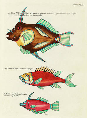Surrealism Royalty Free Images - Vintage, Whimsical Fish and Marine Life Illustration by Louis Renard - Bear Fish, Poisson de Roches Royalty-Free Image by Louis Renard