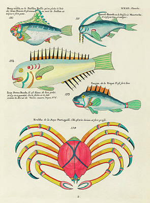 Royalty-Free and Rights-Managed Images - Vintage, Whimsical Fish and Marine Life Illustration by Louis Renard - Berg Visch, Potou Banda by Louis Renard