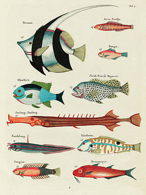 Royalty-Free and Rights-Managed Images - Vintage, Whimsical Fish and Marine Life Illustration by Louis Renard - Bezaan, Ekorbiro, Joulong by Louis Renard