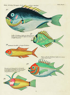 Surrealism Royalty Free Images - Vintage, Whimsical Fish and Marine Life Illustration by Louis Renard - Bolam, Caffer dAmboine Royalty-Free Image by Louis Renard