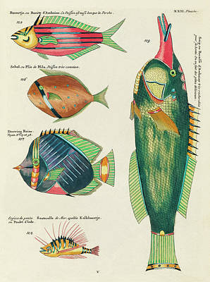 Royalty-Free and Rights-Managed Images - Vintage, Whimsical Fish and Marine Life Illustration by Louis Renard - Bonite, Plie, Snip, Douwing by Louis Renard