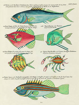 Surrealism Royalty-Free and Rights-Managed Images - Vintage, Whimsical Fish and Marine Life Illustration by Louis Renard - Byter, Bonte Hoen, Popou by Louis Renard