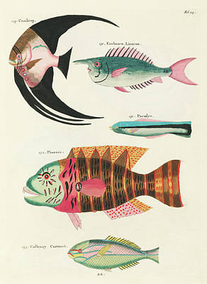 Surrealism Royalty-Free and Rights-Managed Images - Vintage, Whimsical Fish and Marine Life Illustration by Louis Renard - Cambing, Phoenix, Paradys by Louis Renard
