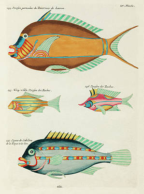 Surrealism Digital Art - Vintage, Whimsical Fish and Marine Life Illustration by Louis Renard - Cod Fish, Klip Visch by Louis Renard