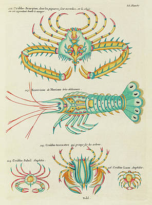 Royalty-Free and Rights-Managed Images - Vintage, Whimsical Fish and Marine Life Illustration by Louis Renard - Crabbe Scorpion, Crab, Shrimp by Louis Renard