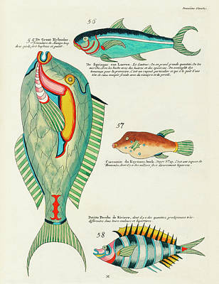 Surrealism Royalty-Free and Rights-Managed Images - Vintage, Whimsical Fish and Marine Life Illustration by Louis Renard - De Groot Eylander, Springer by Louis Renard