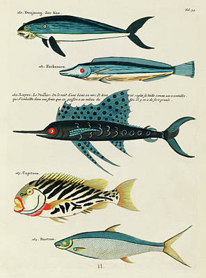 Surrealism Digital Art - Vintage, Whimsical Fish and Marine Life Illustration by Louis Renard - Doujoung, Fockenero, Capitano by Louis Renard