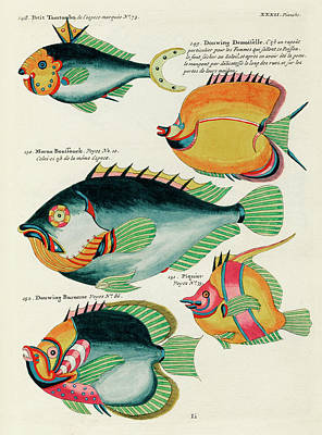 Surrealism Royalty-Free and Rights-Managed Images - Vintage, Whimsical Fish and Marine Life Illustration by Louis Renard - Douwing Demoiselle, Tomtombo by Louis Renard