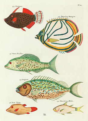 Surrealism Digital Art - Vintage, Whimsical Fish and Marine Life Illustration by Louis Renard - Douwing Marquis, Stone Bream by Louis Renard