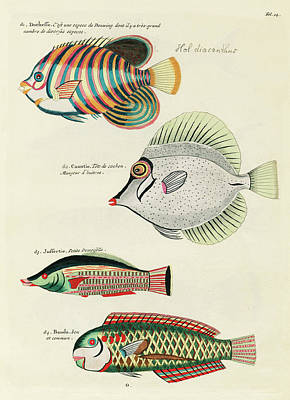 Surrealism Digital Art - Vintage, Whimsical Fish and Marine Life Illustration by Louis Renard - Duchesse, Caantie, Banda by Louis Renard
