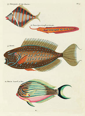 Surrealism Royalty-Free and Rights-Managed Images - Vintage, Whimsical Fish and Marine Life Illustration by Louis Renard - Ekorpante, Gaya, Omma, Duc by Louis Renard