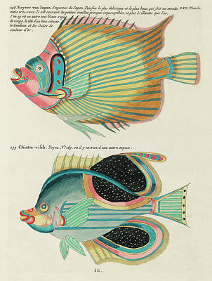 Comic Character Paintings - Vintage, Whimsical Fish and Marine Life Illustration by Louis Renard - Empereur du Japon, Chietse by Louis Renard