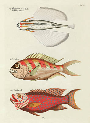 Amy Hamilton Animal Collage - Vintage, Whimsical Fish and Marine Life Illustration by Louis Renard - Flying Sea Owl, Sousalath by Louis Renard