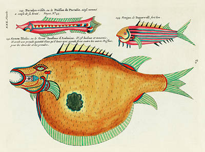 Surrealism Royalty-Free and Rights-Managed Images - Vintage, Whimsical Fish and Marine Life Illustration by Louis Renard - Groote Blaser, Paradys Visch by Louis Renard