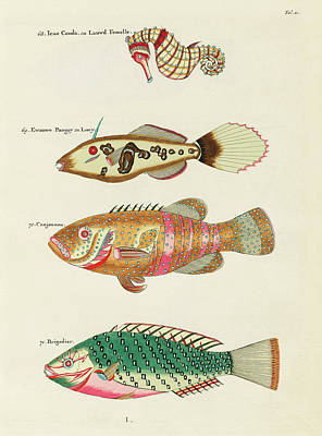 Surrealism Royalty-Free and Rights-Managed Images - Vintage, Whimsical Fish and Marine Life Illustration by Louis Renard - Ican Couda, Canjounou by Louis Renard