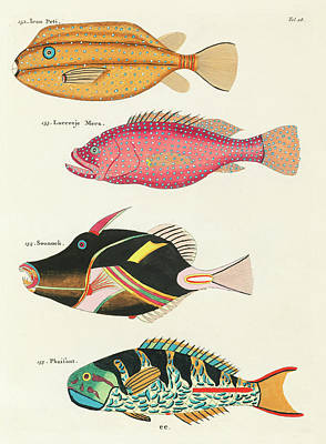 Amy Hamilton Animal Collage - Vintage, Whimsical Fish and Marine Life Illustration by Louis Renard - Ican Peti, Sounock, Pheasant by Louis Renard