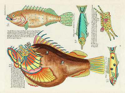 Surrealism Digital Art - Vintage, Whimsical Fish and Marine Life Illustration by Louis Renard - Ican Satan, Klip Visch by Louis Renard
