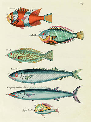 Surrealism Digital Art - Vintage, Whimsical Fish and Marine Life Illustration by Louis Renard - Jourdin, Corbeille, Ican Baby by Louis Renard
