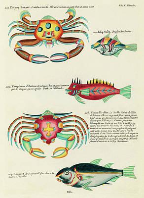 Surrealism Digital Art - Vintage, Whimsical Fish and Marine Life Illustration by Louis Renard - Katjang Roeper, Kruys Krabbe by Louis Renard
