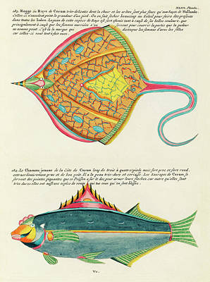 Surrealism Royalty-Free and Rights-Managed Images - Vintage, Whimsical Fish and Marine Life Illustration by Louis Renard - Le Chameau Jeaune, Ray Fish by Louis Renard