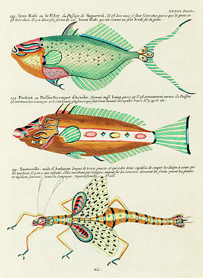 Surrealism Royalty-Free and Rights-Managed Images - Vintage, Whimsical Fish and Marine Life Illustration by Louis Renard - Le FIlet, Sauterelle, Parkiet by Louis Renard