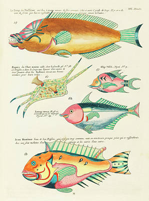 Surrealism Royalty-Free and Rights-Managed Images - Vintage, Whimsical Fish and Marine Life Illustration by Louis Renard - Le loup de Nasselaw, Honimo by Louis Renard