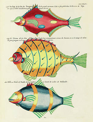 Surrealism Royalty-Free and Rights-Managed Images - Vintage, Whimsical Fish and Marine Life Illustration by Louis Renard - Lemon Fish, Red Turbot by Louis Renard