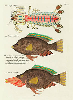 Surrealism Digital Art - Vintage, Whimsical Fish and Marine Life Illustration by Louis Renard - Lokje Lokje, Passer by Louis Renard