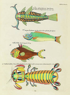 Surrealism Royalty-Free and Rights-Managed Images - Vintage, Whimsical Fish and Marine Life Illustration by Louis Renard - Lokkie Lokkie, Tamaota by Louis Renard