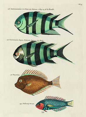 Royalty-Free and Rights-Managed Images - Vintage, Whimsical Fish and Marine Life Illustration by Louis Renard - Lootsmannetie, Toutetou by Louis Renard