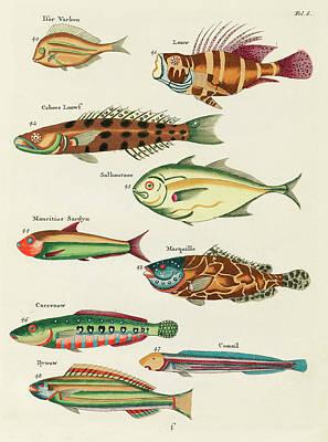 Surrealism Digital Art - Vintage, Whimsical Fish and Marine Life Illustration by Louis Renard - Louw, Caboes, Salkoutoec by Louis Renard