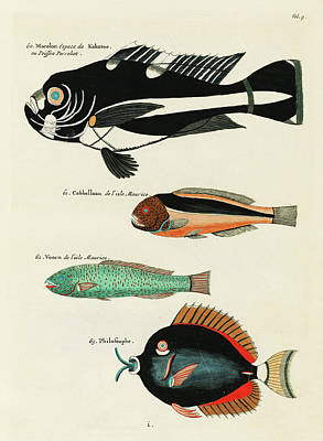 Surrealism Royalty-Free and Rights-Managed Images - Vintage, Whimsical Fish and Marine Life Illustration by Louis Renard - Macolor, Kakatoe, Voorn by Louis Renard