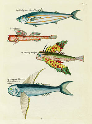 Surrealism Royalty-Free and Rights-Managed Images - Vintage, Whimsical Fish and Marine Life Illustration by Louis Renard - Marlpriem, Vligende Harder by Louis Renard