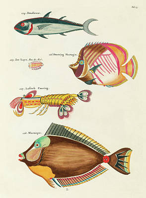 Surrealism Royalty-Free and Rights-Managed Images - Vintage, Whimsical Fish and Marine Life Illustration by Louis Renard - Marouque, Doudieuw by Louis Renard