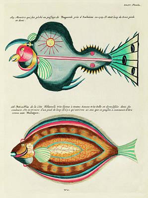 Surrealism Digital Art - Vintage, Whimsical Fish and Marine Life Illustration by Louis Renard - Monster Fish, Flounder Fish by Louis Renard