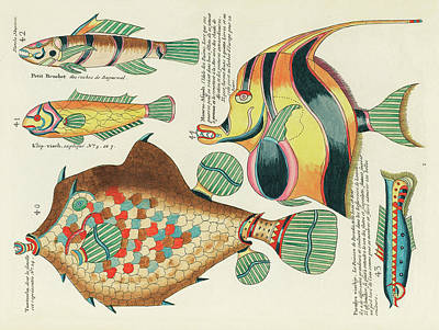 Surrealism Royalty-Free and Rights-Managed Images - Vintage, Whimsical Fish and Marine Life Illustration by Louis Renard - Moorish Afgodt, Tomtombo by Louis Renard