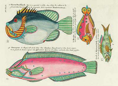 Animals Digital Art - Vintage, Whimsical Fish and Marine Life Illustration by Louis Renard - Moron Boussouck, Parequiet by Louis Renard