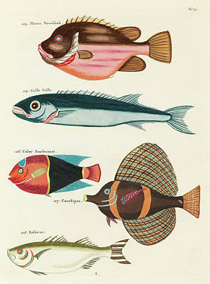 Surrealism Royalty-Free and Rights-Managed Images - Vintage, Whimsical Fish and Marine Life Illustration by Louis Renard - Moron Boussouk, Galle Galle by Louis Renard