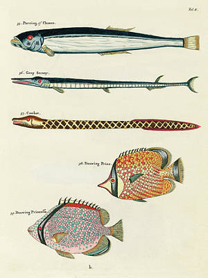 Surrealism Royalty-Free and Rights-Managed Images - Vintage, Whimsical Fish and Marine Life Illustration by Louis Renard - Parring, Geep Serooy, Cambat by Louis Renard
