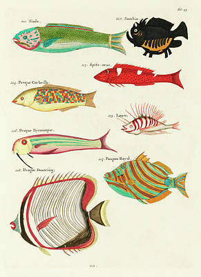 Amy Hamilton Animal Collage - Vintage, Whimsical Fish and Marine Life Illustration by Louis Renard - Pesque Douwing, Poupou Royal by Louis Renard