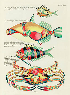 Surrealism Royalty-Free and Rights-Managed Images - Vintage, Whimsical Fish and Marine Life Illustration by Louis Renard - Poupou Indien, Keysers Krabbe by Louis Renard