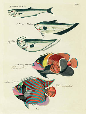 Surrealism Royalty-Free and Rights-Managed Images - Vintage, Whimsical Fish and Marine Life Illustration by Louis Renard - Sardine, Douwing Admiral by Louis Renard