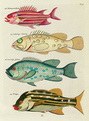 Surrealism Royalty-Free and Rights-Managed Images - Vintage, Whimsical Fish and Marine Life Illustration by Louis Renard - Schouwerdick, Prique by Louis Renard