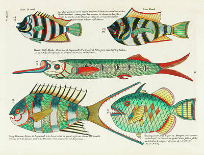 Surrealism Royalty-Free and Rights-Managed Images - Vintage, Whimsical Fish and Marine Life Illustration by Louis Renard - Sian Mamel, Sian Femel by Louis Renard