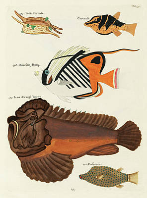 Amy Hamilton Animal Collage - Vintage, Whimsical Fish and Marine Life Illustration by Louis Renard - Swangi Touwa, Douwing Duke by Louis Renard