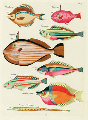 Comic Character Paintings - Vintage, Whimsical Fish and Marine Life Illustration by Louis Renard - Tandock, Touring, Poupou by Louis Renard