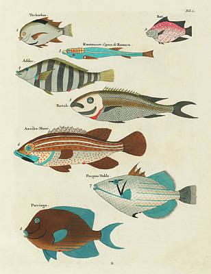 Surrealism Mixed Media Rights Managed Images - Vintage, Whimsical Fish and Marine Life Illustration by Louis Renard - Terkoekoe, Parringa, Poupou Royalty-Free Image by Louis Renard