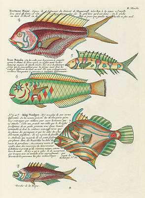 Amy Hamilton Animal Collage - Vintage, Whimsical Fish and Marine Life Illustration by Louis Renard - Toctasse Moor, Ican Banda by Louis Renard